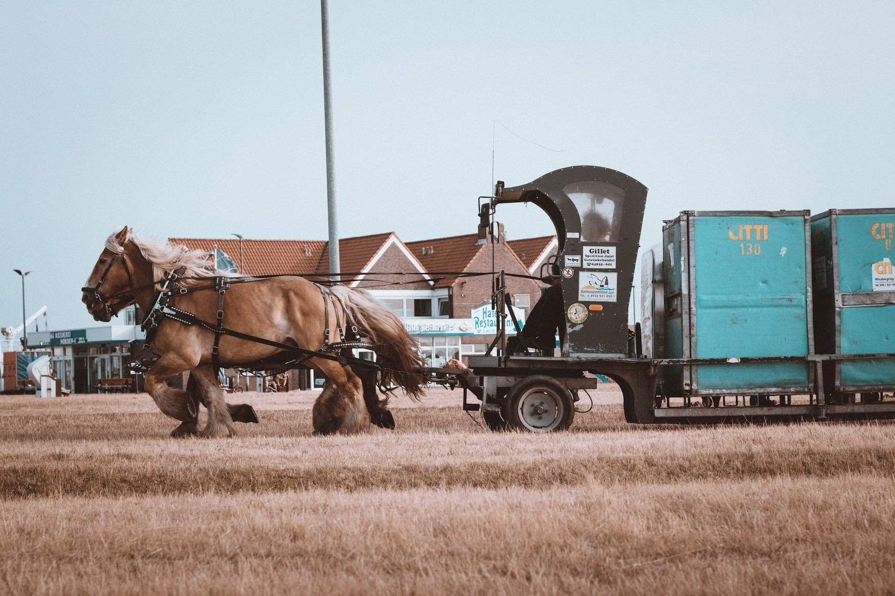 Pferdekutsche auf der Insel Juist