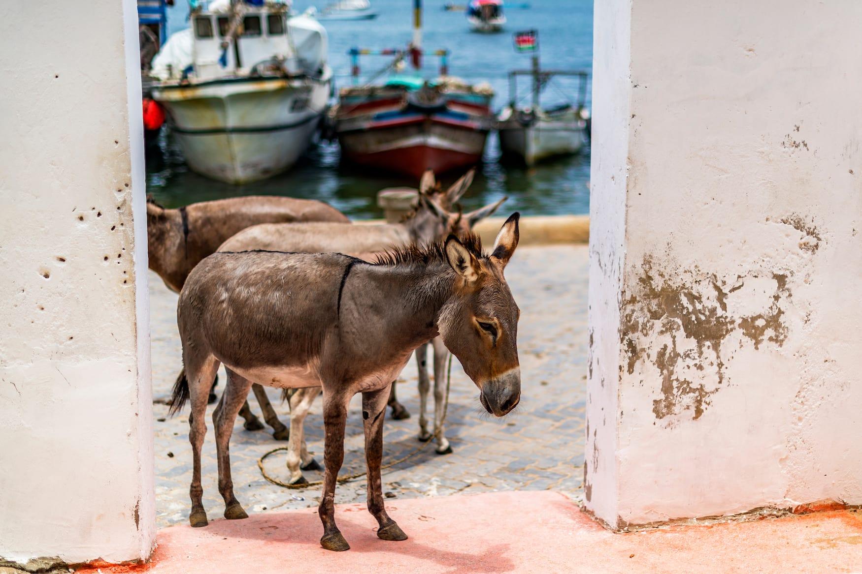 Esel statt Auto heißt es auf der autofreien Lamu Island in Kenia