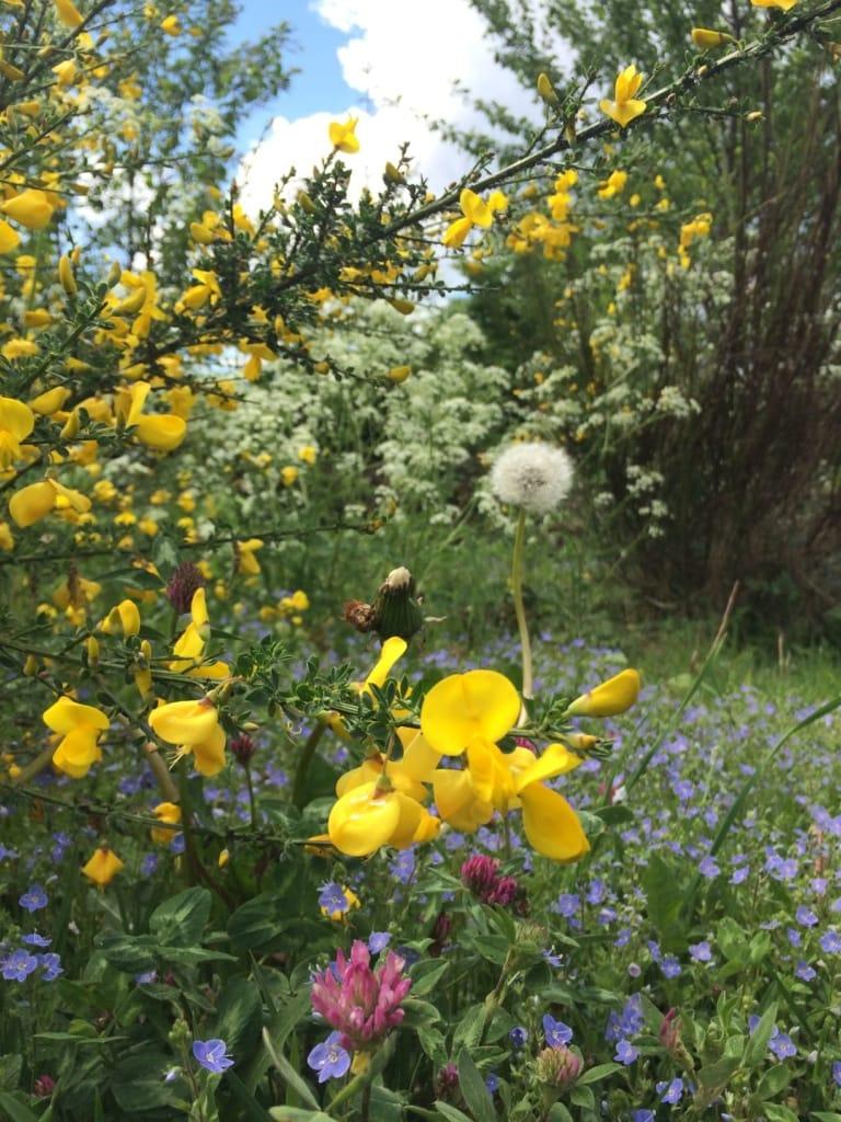 Blumen im Siegtal