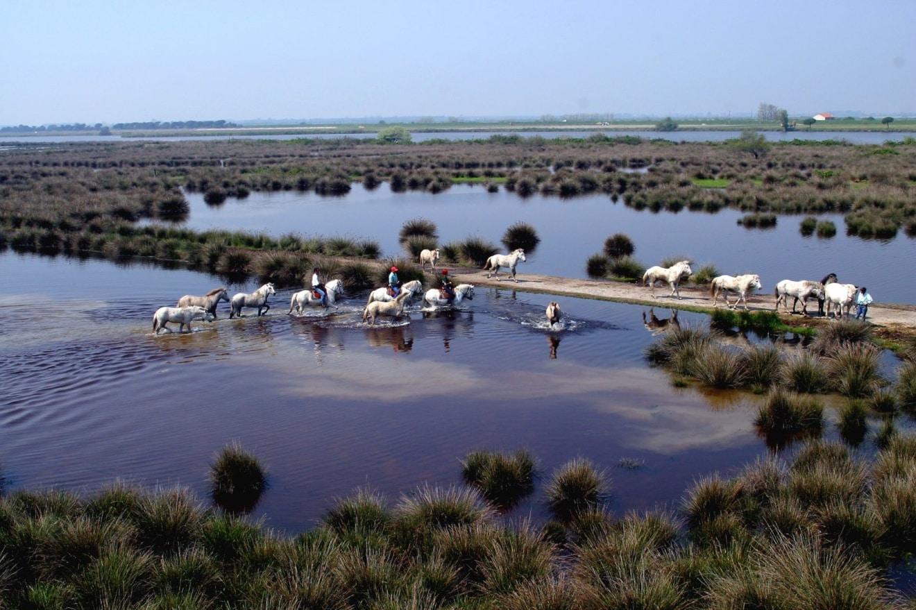 Comacchio Pferde im Delta