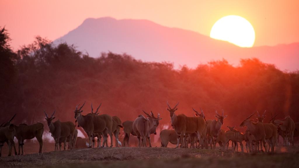 Im neueröffneten Chikwenya Camp von WIlderness Safaris in Simbabwe sind nicht nur die Sonnenuntergänge ein ganz besonderes Erlebnis.