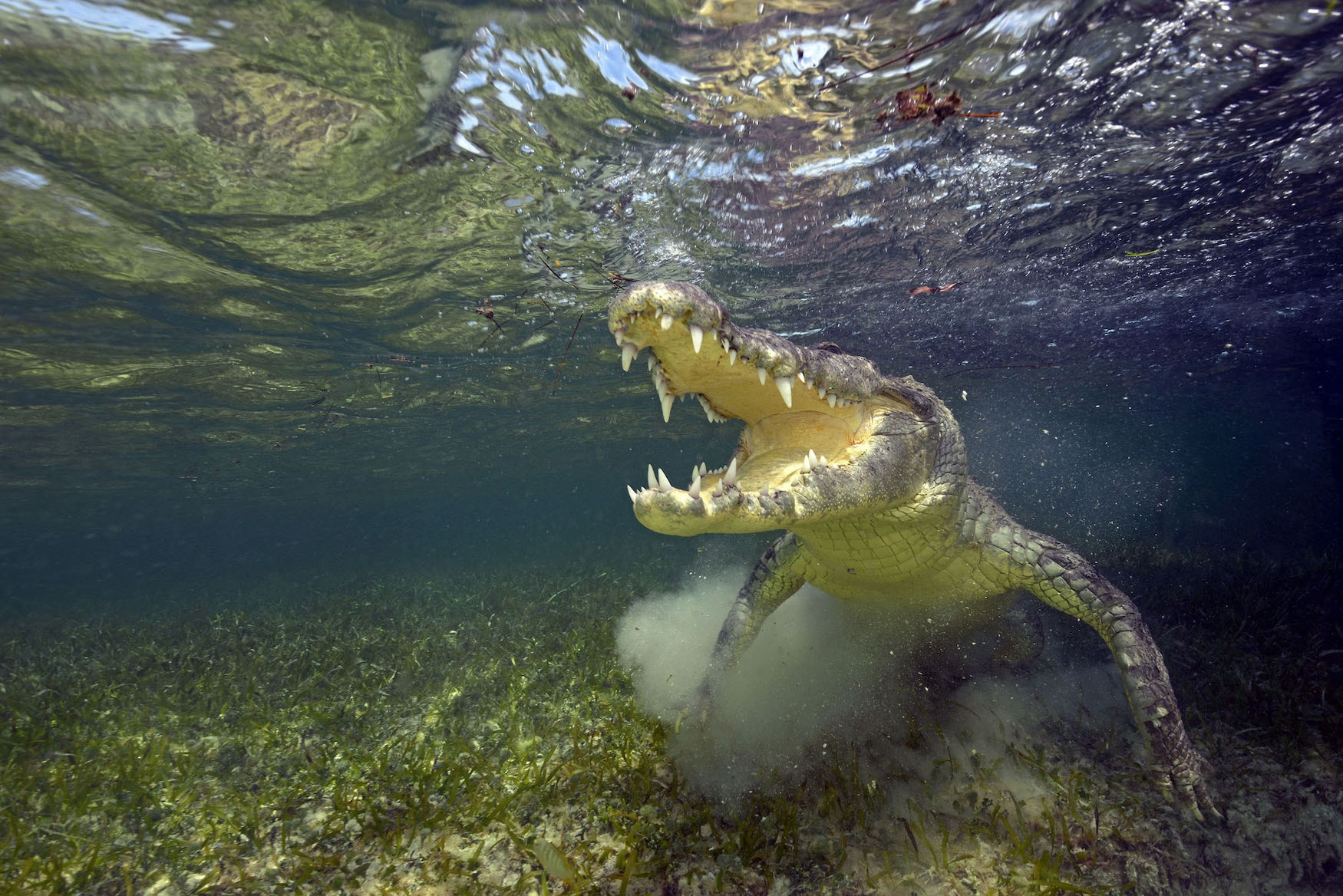 Krokodiltauchen Mexiko, Banco Chinchorro