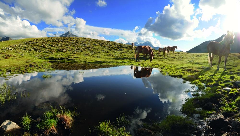 Islandpferde in Tirol