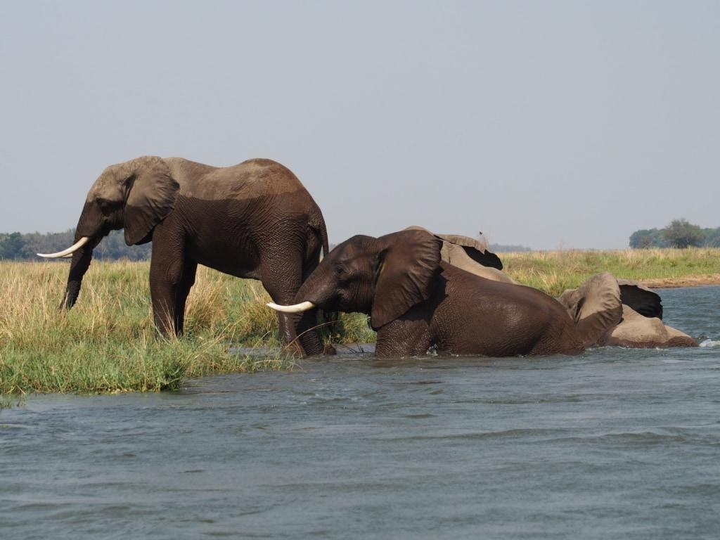 Das neueröffnete Chikwenya Camp von Wilderness Safaris am Ufer des Sambesi in Simbabwe ist ein Paradies für Elefanten.