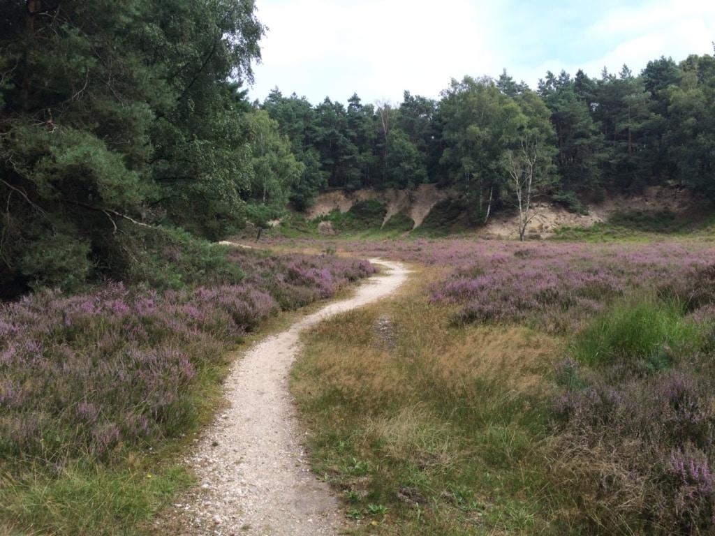 Wanderweg im Naturpark Maas Schwalm Nette