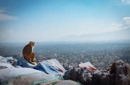 Affe vor der Aussicht über kathmandu, Nepal