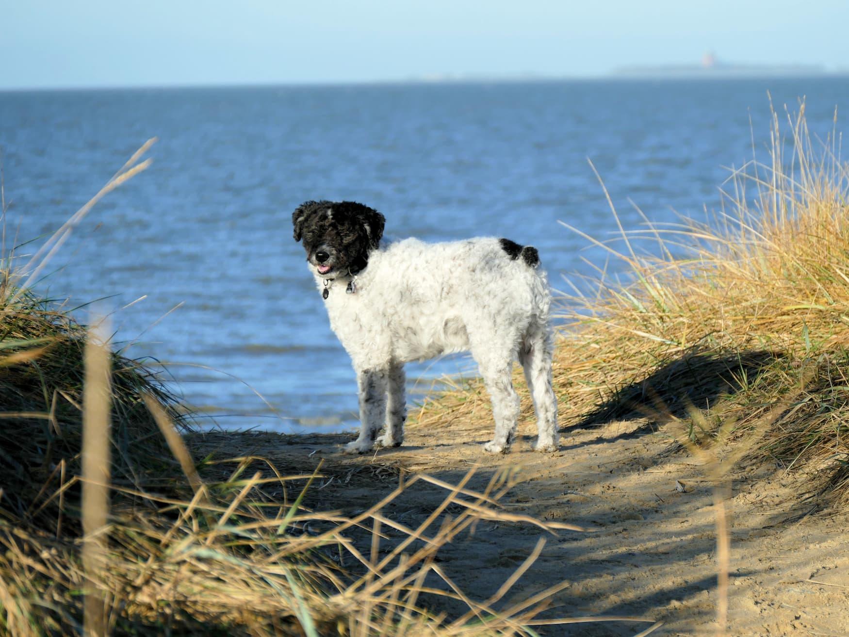 Hund spielt an einem Strand in Norddeutschland