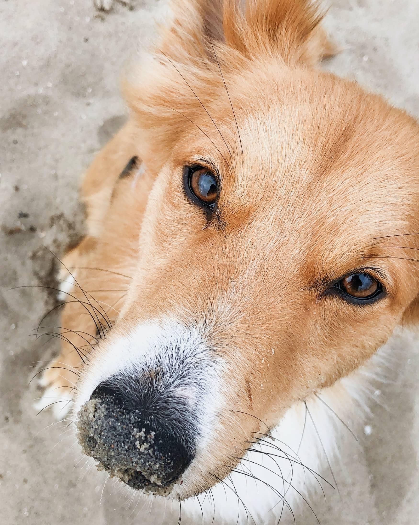 Strandurlaub mit Hund in Niedersachsen