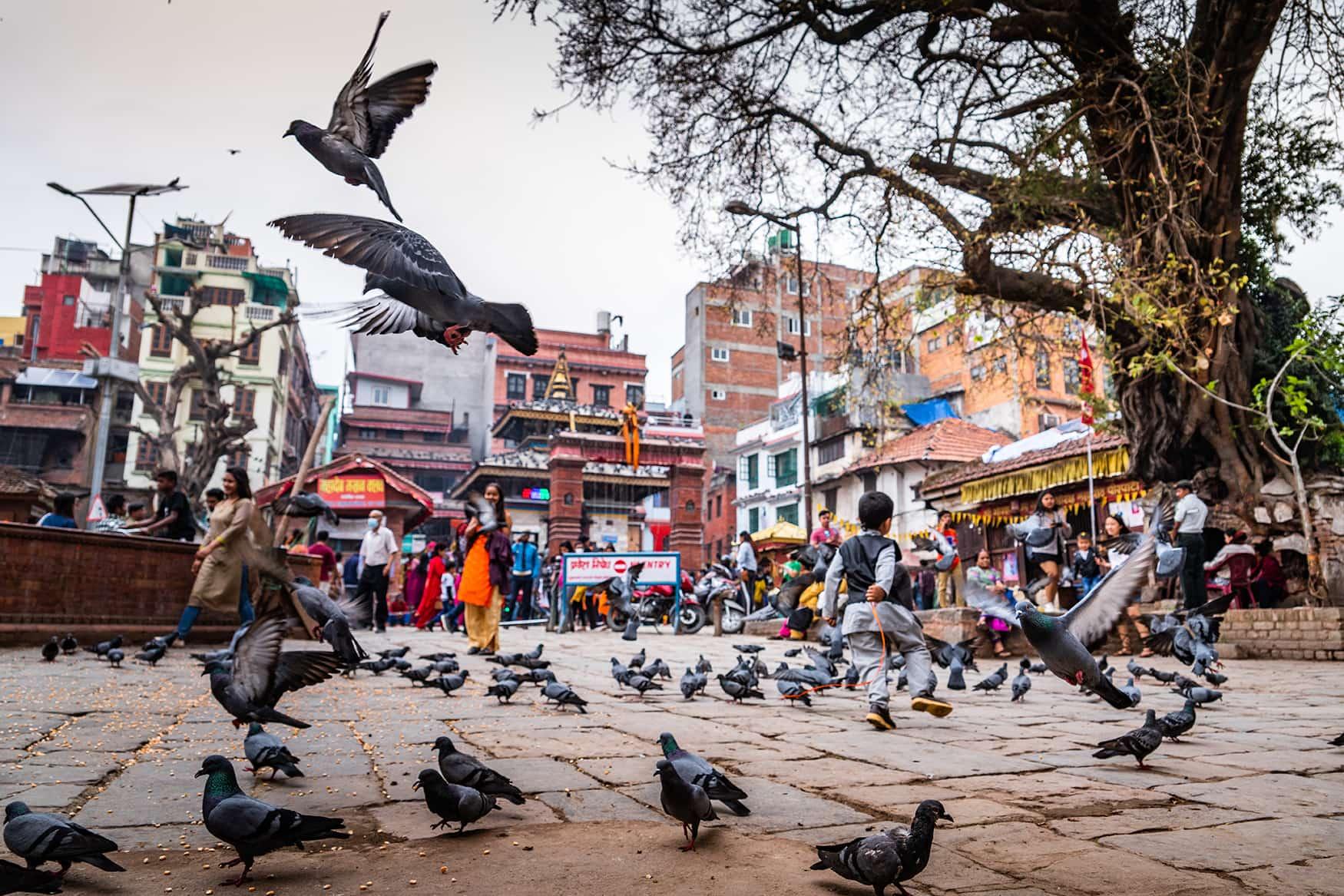 Tauben auf öffentlichem Platz in Kathmandu, Nepal