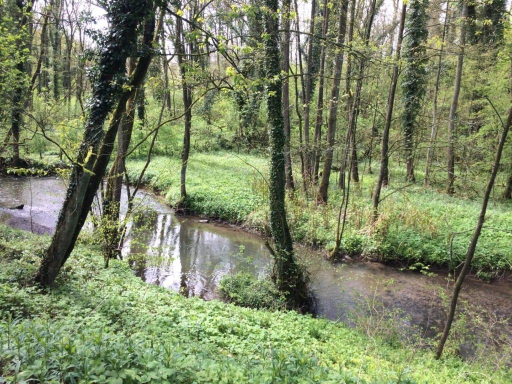 Fluss im Neandertal in NRW
