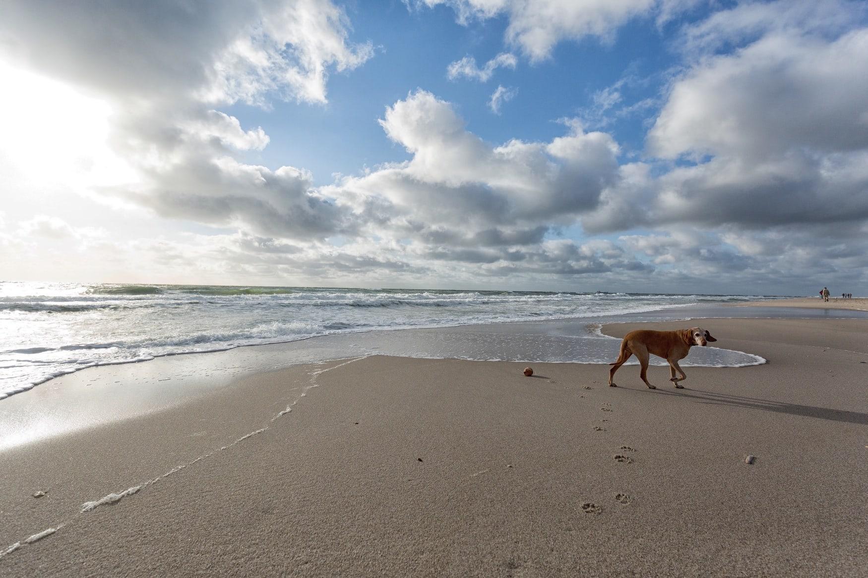 Strandurlaub mit Hund auf Sylt