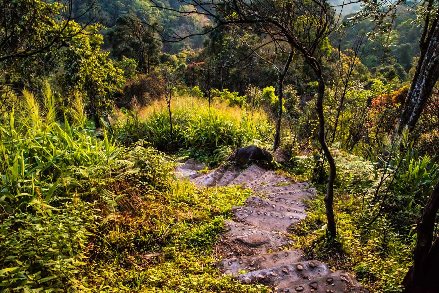 """Jaco Steps"" Stufen im Wald, Dominica"