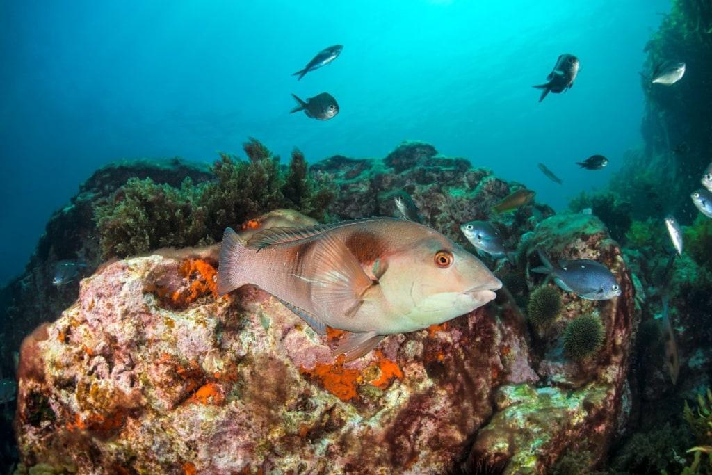 Fisch Neuseeland