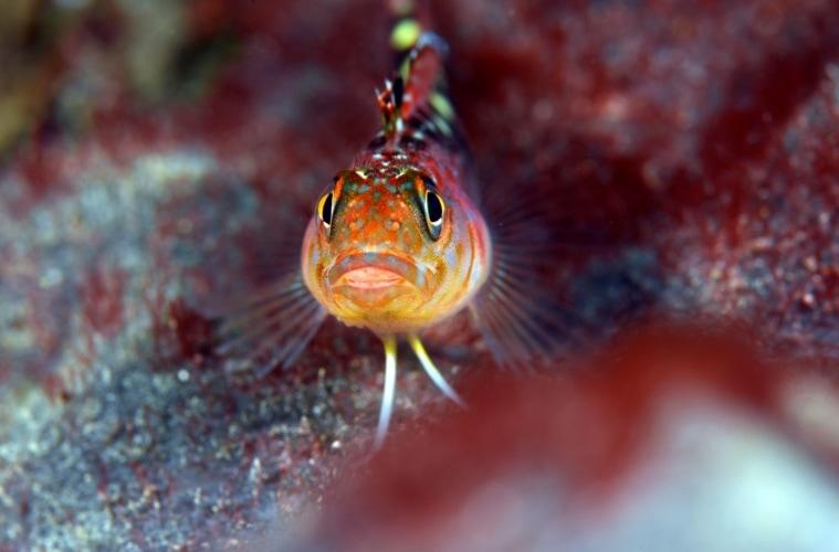Fisch in Neuseelands Gewässern