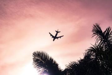 Flugzeug Luft Palmen