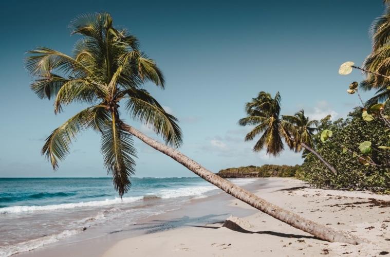 Strand mit Palme auf Martinique