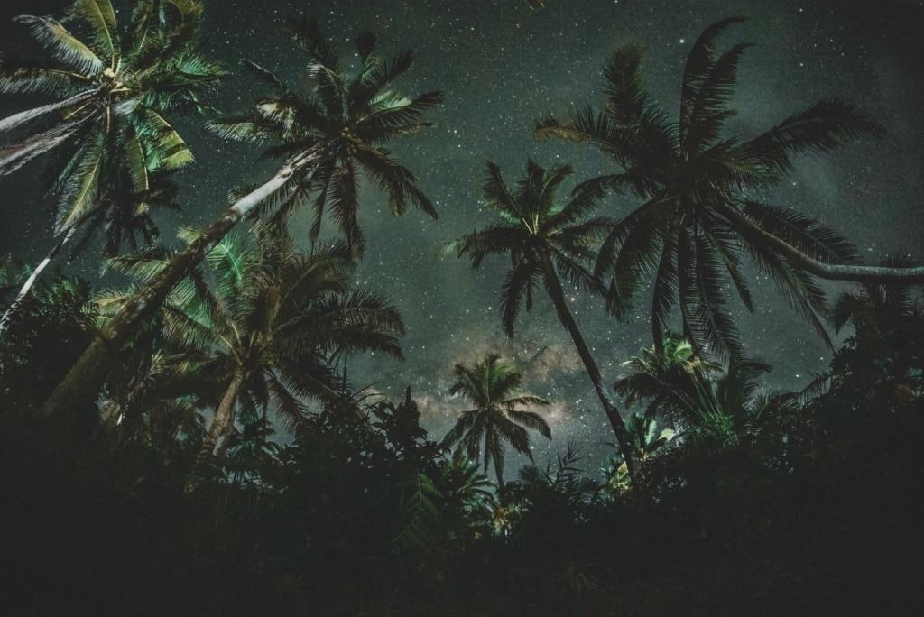 Sternenhimmel über Palmen