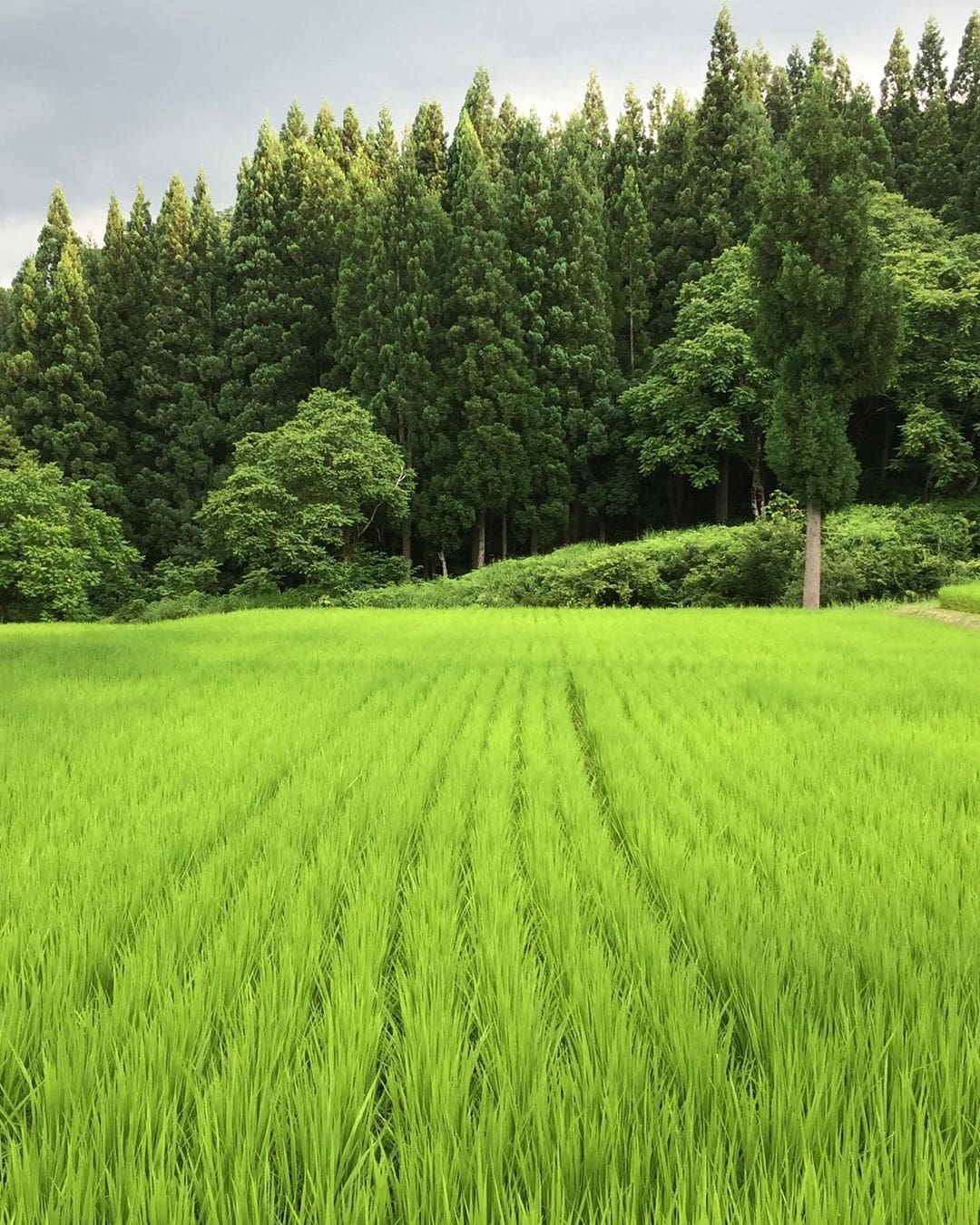 Nein, auf diesem Bild liegt tatsächlich kein Filter – die Reisfelder in den Japanischen Alpen erstrahlen wirklich so grün. Redakteurin @marie.worldwild war für uns zu Besuch im @satoyamajujo – und hat ein noch unentdecktes Juwel in den Bergen gefunden. @design_hotels #wellnessgoals #farmtotable #design #auszeit #japan #japanalps #luxury #hoteltipp #hotel #comewithme #traveldeeper #passionpassport #berge #bergeliebe #gourmet