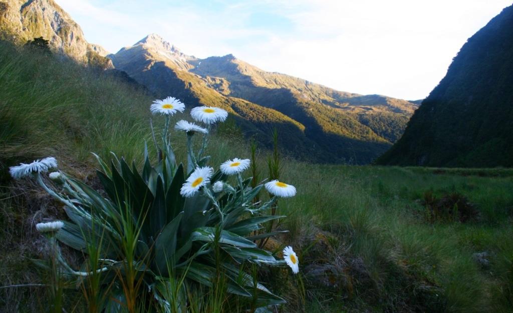 Der Gillespie Path in Neuseeland führt Wanderer in einsame, wilde Natur.