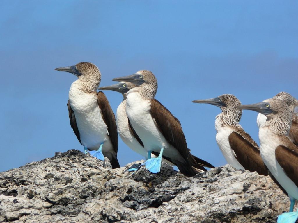 Willkommen in der Pikaia Lodge auf Galapagos!