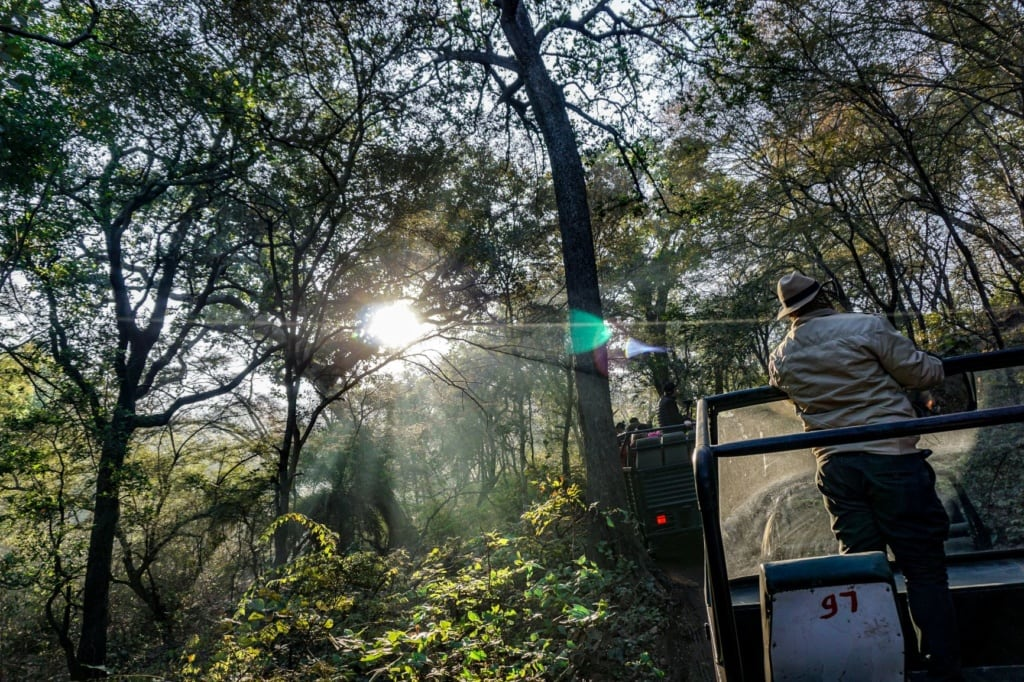 Jeepsafari im Ranthambore Nationalpark in Indien