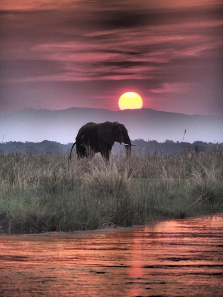 Dramatische Sonnenuntergänge am Sambesi bleiben unvergessen.
