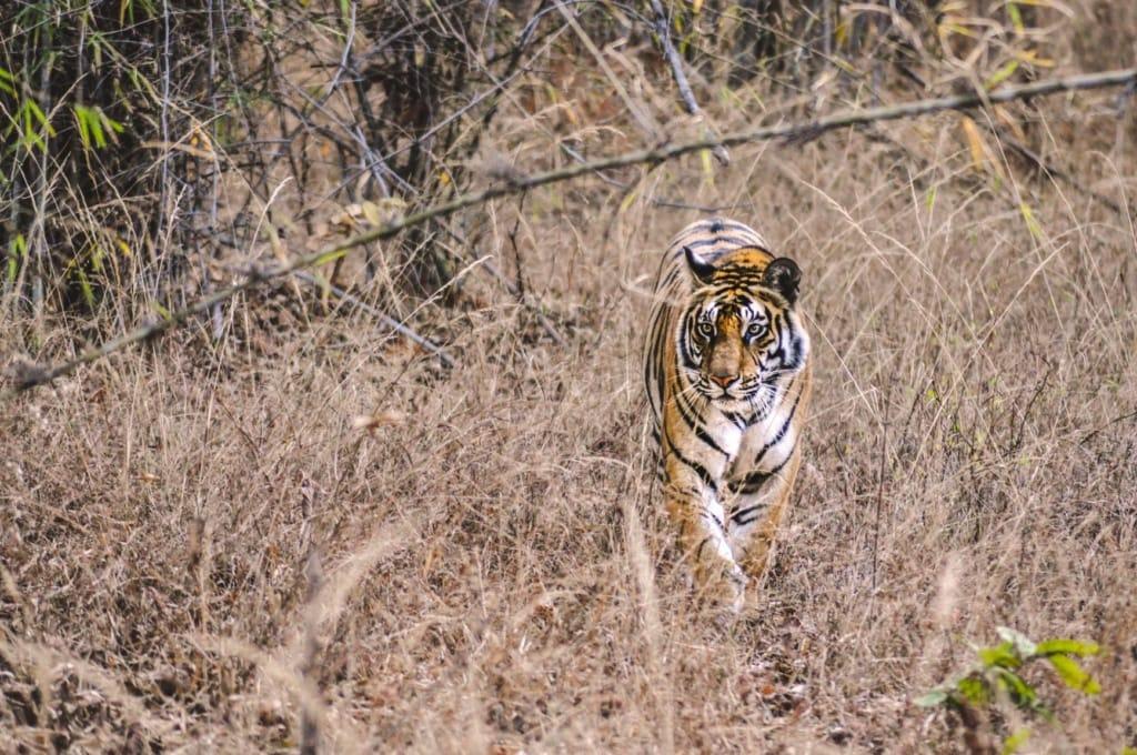 Auf Tigersuche im Nationalpark Ranthambhore