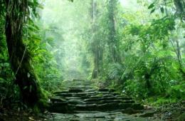 Geheimnisvolle Städte: Treppen zur Ciudad Perdida