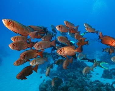 Tauchen in Palau: farbprächtiges Spektakel