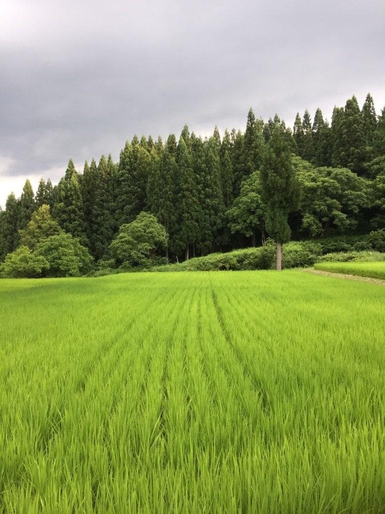 Im Satoyama Jujo in den Japanischen Alpen darf geschlemmt und entspannt werden.