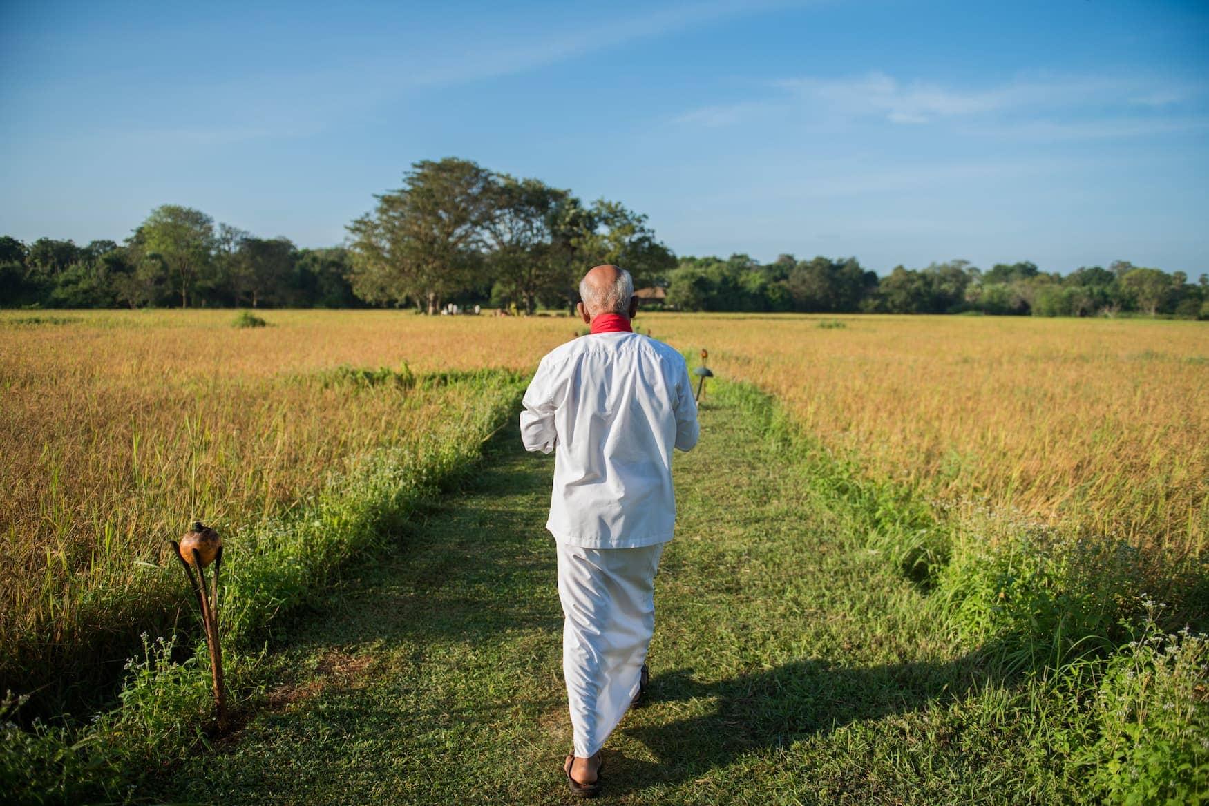 Mann spaziert durch Reisfelder