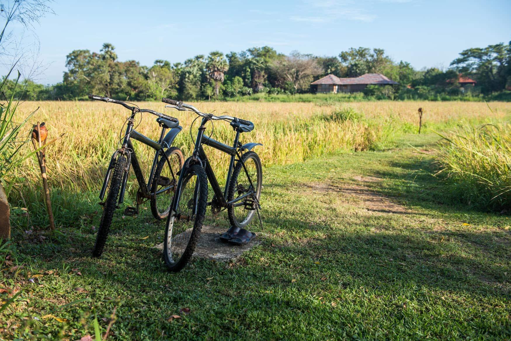 Zwei Fahrräder vor Reisfeld