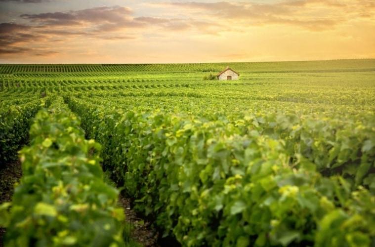 Champagne-Region in Frankreich