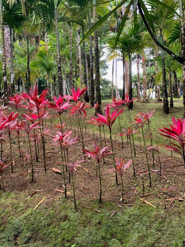 Ausflüge auf Martinique: Besuch im Jardin Balata