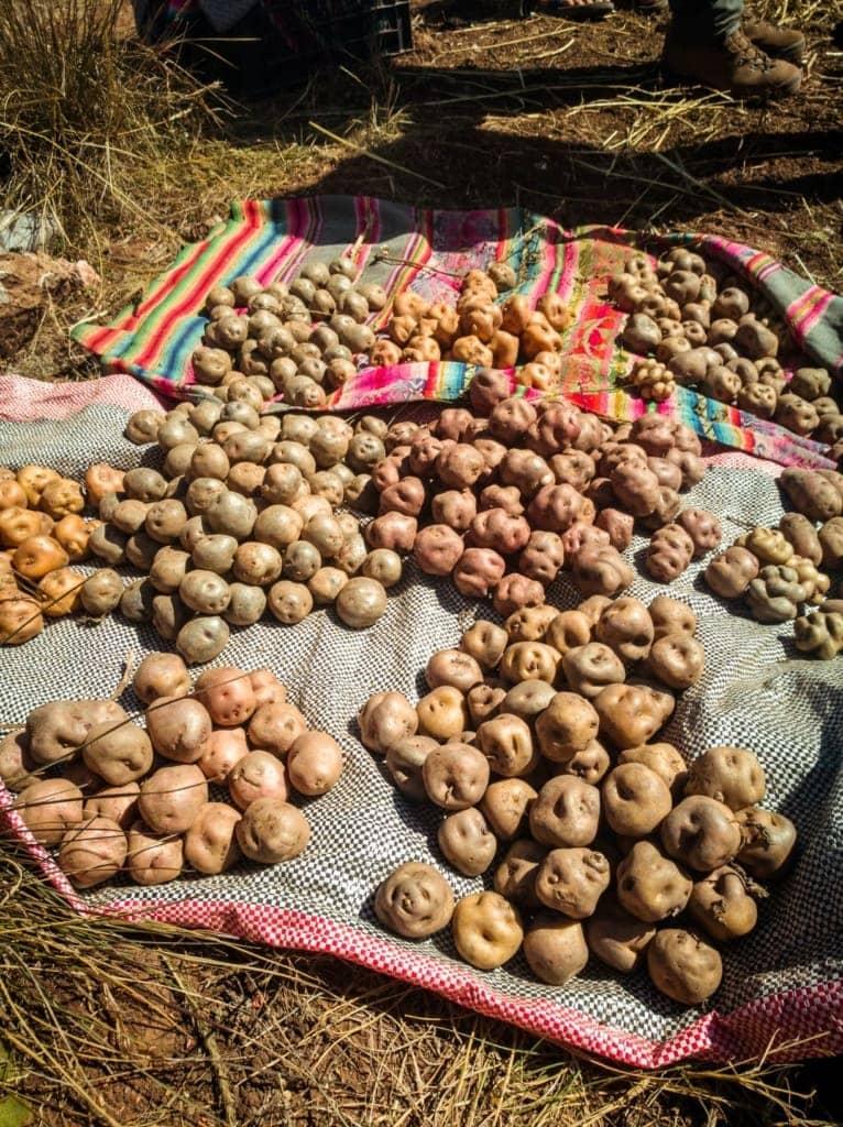 Kartoffeln auf Boden liegend in Peru