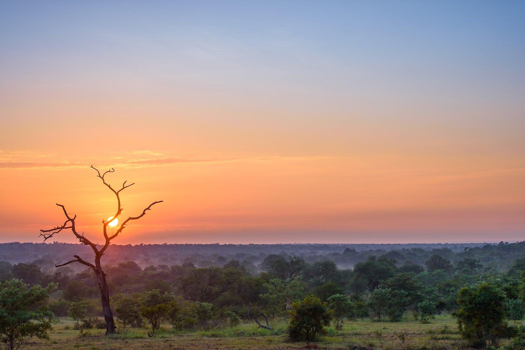 Südafrika, Afrika, Sonnenuntergang, Safari
