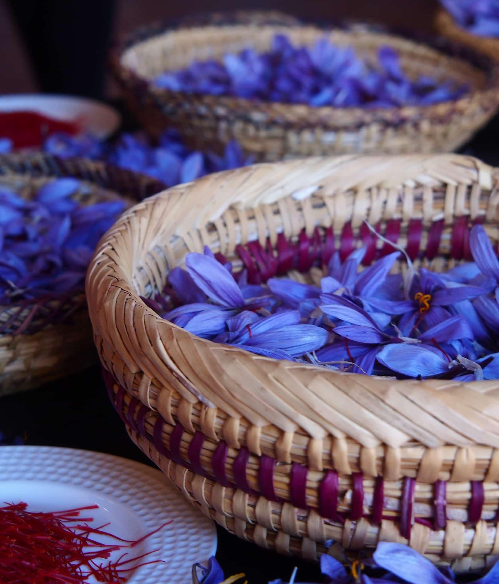 Safranblüten im Paradise du Safran - Marrakesch - Kreative