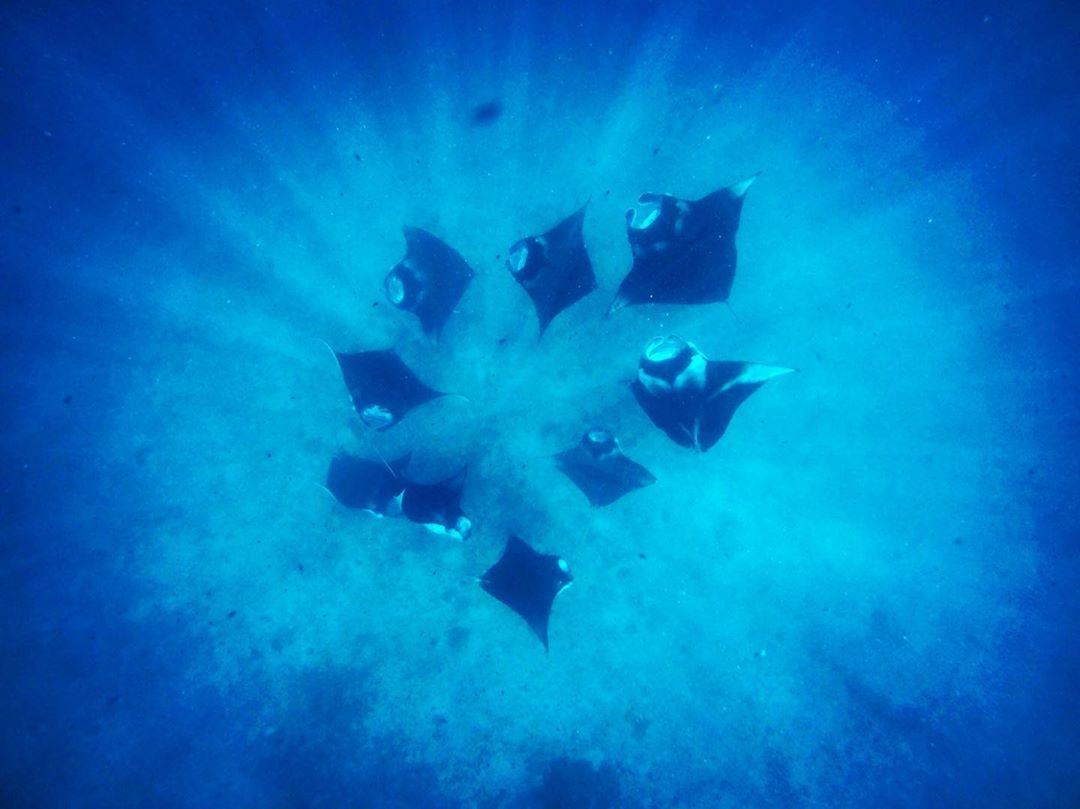 Ab ins Blaue – Wir schicken ein paar tierische Grüße von den Malediven! #mantalove @faarufushimaldives #comewithme #oceanlovers #malediven #maledives #reporterontour #passionpassport #dive #schnorcheltour #unterwasser #abinsblaue #traveldeeper #manta #wildlife #wildlifephotography #faarufushi #faarufushimaldives