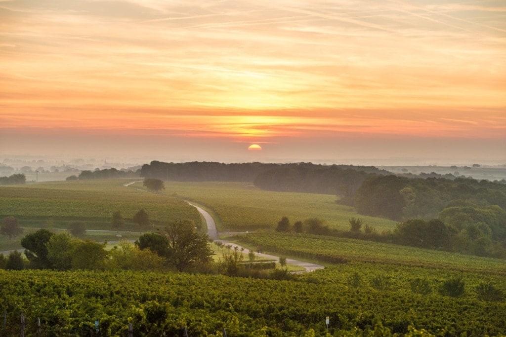 Landschaft in der Pfalz