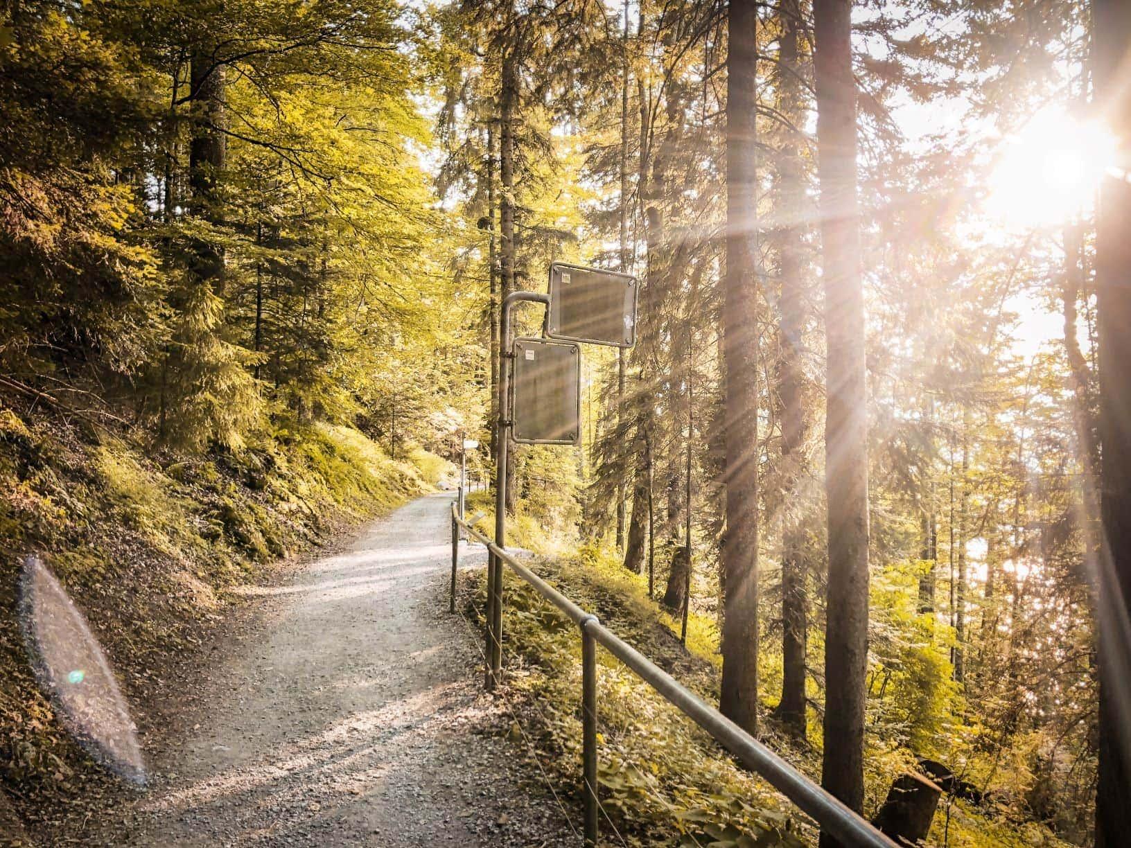 Wanderweg in der Nähe von Zürich