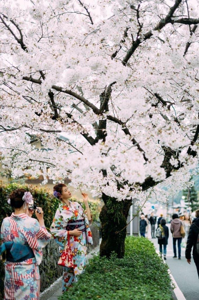 Kirschbaumblüte in Japan