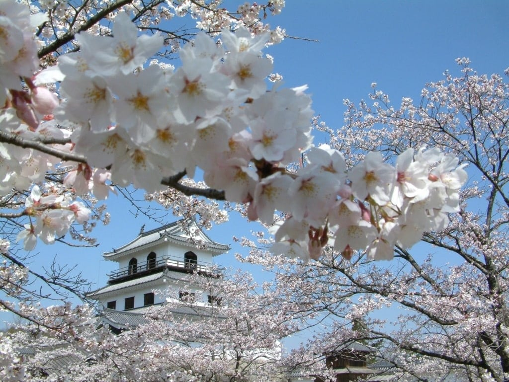 Shiroishi Castle in Japan während der Kirschbaumblüte