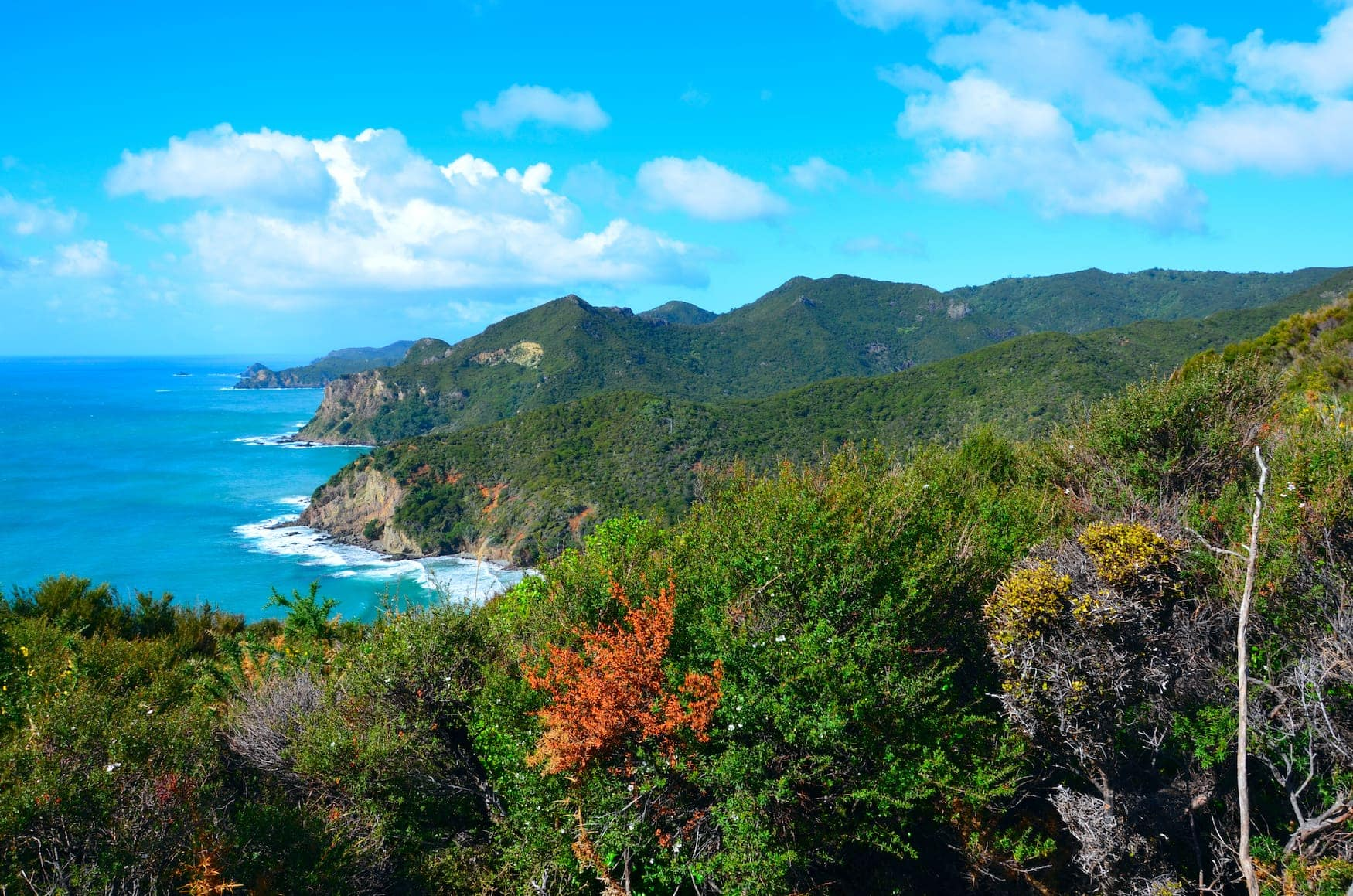 Great Barrier Island in Neuseeland