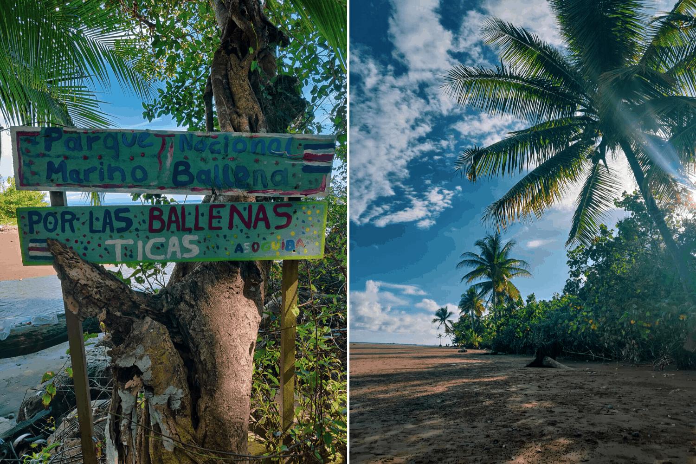 Ruhiger Strandabschnitt mit Palmen im Marino Ballena Nationalpark in uvita