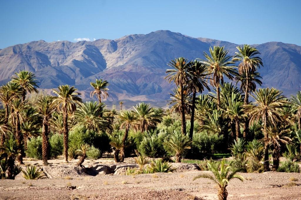 Dattelpalmen in Skoura, Marokko