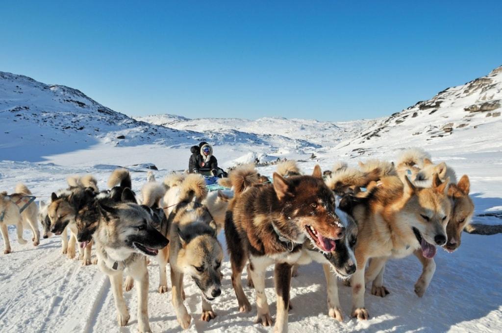 Schlittenhund galoppieren durch die Landschaft in Grönland