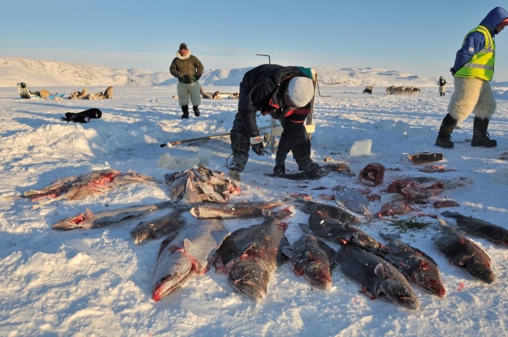 Inuit auf Grönland mit ihrem Fischfang
