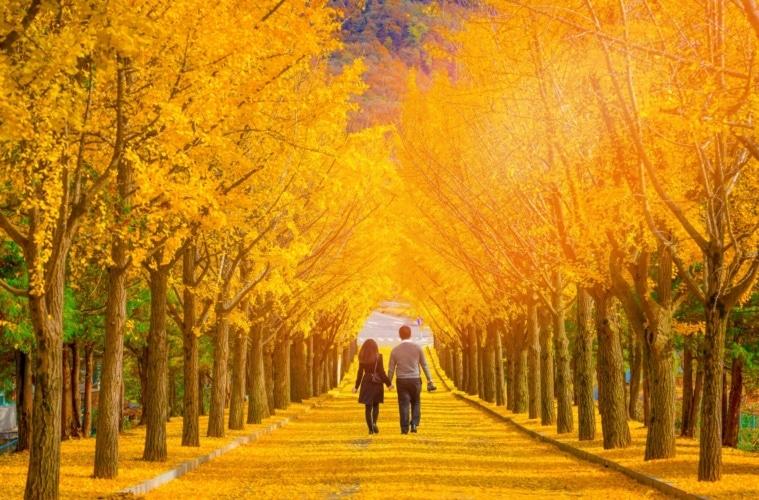 Paar geht entlang einer Allee in Korea