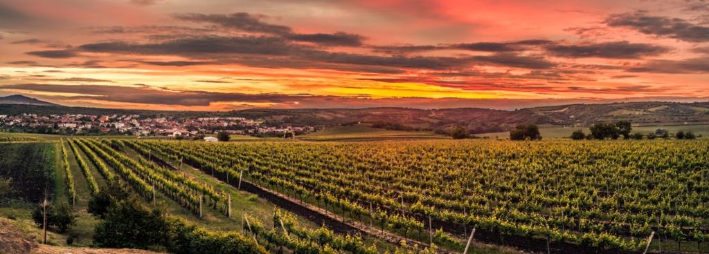Weinanbautgebiet Velke Pavlovice in Südmähren, Tschechien