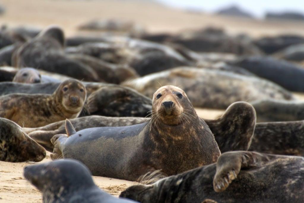 Auf den Blasket Island leben nur Tiere – außer die Bewohner des wohl abgeschiedensten Hotels Irlands.